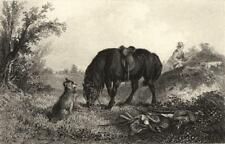 DOGS: 'In Charge'. Dog guarding Horse. Man shooting (Edward Jesse); print 1888