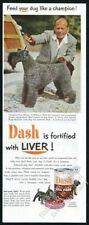 1952 Kerry Blue Terrier champion color photo Dash dog food vintage print ad