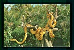 Postcard Disney World Giant Python Adventureland Jungle Cruise. B2