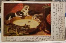 1906 CAT KITTENS & Big Bowl of Milk Vintage Art Undivided Back Postcard