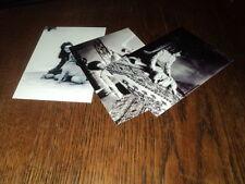 SHEILA LOT DE PHOTOS FORMAT 10*15 N&B - THEME 007 ANIMAUX - 3 PRISES