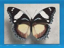 Carte Publicitaire Papillons Hypolimnas dexithea Madagacar