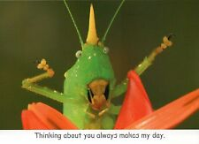 Rhinoceros Conehead Katydid, Thinking Of You Insect Greeting Card - Not Postcard