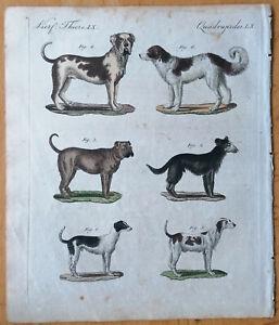Bertuch Originaldruck Koloriert Hunde (B) - 1792