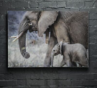 Canvas Glass Wall Art Print Picture Large ANY SIZE Baby Elephant Animals p16066
