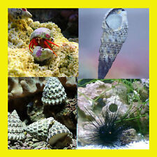 Marine Cleaner Pack Deluxe (Saltwater Fish) Snails and Crabs
