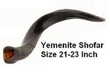 "22"" Kosher Yemenite Jewish SHOFAR Kudu Horn,1/2 Polished, Synagogue Prayer Blow"