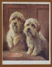 Dandie Dinmont Terrier Ddt Dog Art Framed and Mounted Print by Lilian Cheviot