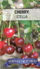cherry tree stella bare rooted heritage fruit tree x1