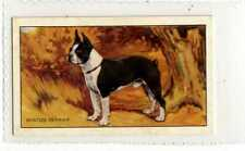(Js097-100) Gallaher,Dogs,The Boston Terrier, 1936 #45