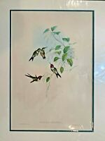Original Hand Colored Lithograph Hummingbirds Gould Amethyst