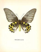 """1963 Vintage PROCHAZKA BUTTERFLY """"CRAMER TROIDES HYPOLITUS"""" COLOR Lithograph"""