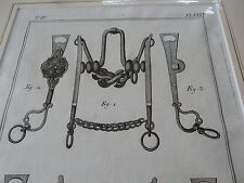 HORSE EQUESTRIAN BITS BRIDLE   amazing mounted 1700s engravings GIFT POTENTIAL f