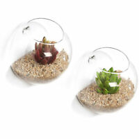 Set of 2 Wall Mounted Clear Glass Terrariums / Air Plant Globes Display Bowl Jar
