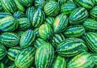 Congo Watermelon Seeds 20 Ct Fruit USA 35-50 lbs NON-GMO FREE SHIPPING SWEET