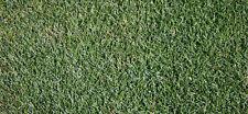 LAWN SEED - AWARD KENTUCKY BLUEGRASS - BEAUTIFUL TURF GRASS, GREAT COLOR - 500 g