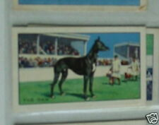 #18 The Daw Greyhound racing  - Sport cigarette card