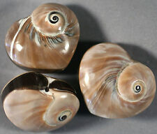 CLEVER HEART SHAPED DOUBLE-SIDED SHELL WHORL FOCAL PENDANT BEAD 29X27MM (1)
