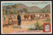 Plowing With Ox Cattle In South Africa Farming c1903 Trade Ad Card