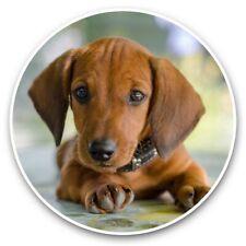 2 x Vinyl Stickers 25cm - Dachshund Puppy Dog Brown Pet  #44827