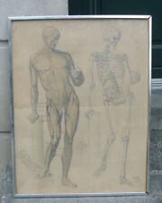 Superb Human Skeleton and Muscles. Master pencil drawing. Signed and dated 1920