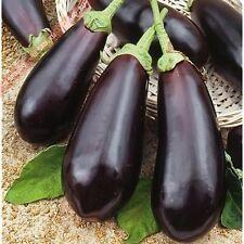 Seeds Eggplant Aubergine Diamond Purple Organic For Garden Russian Ukraine