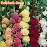 100Pc Hot Hollyhock Summer Carnival Colorful Chaters Flower Seeds Garden Decor