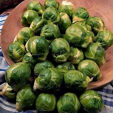 Légumes Chou de Bruxelles Sept Hills Environ 500 Graines