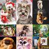 5D Dog Diamond Embroidery Painting Cross Stitch DIY Art Craft Home Decorations