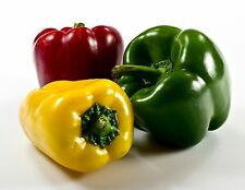 Vegetable Seed - CAPSICUM - Multi Color Sweet Bell Mixed Pack - Pack of 30 Seed
