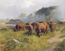 Cardon Claude Highland Cattle In A Glen Canvas 16 x 20 #2660