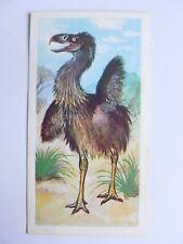 Brooke Bond Prehistoric Animals tea card 30. Phorusrhacos.