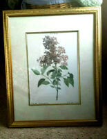 """ANTIQUE FRAMED BOTANICAL PRINT HAND COLORED LILAC ROTHOMAGENSIS 18"""" X 22"""""""