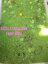 3/4 Cup Azolla Caroliana Fairy Moss Live Floating Pond Aquarium Aquatic Plant