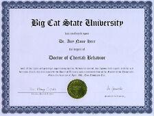Doctor Cheetah Behavior Novelty Diploma Cat Predator