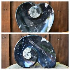 More details for new orthoceras ammonite-heart display ornament fossil plate bowl trinket dish