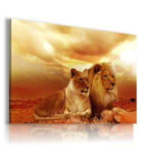 AFRICA LIONS DESERT SUNSET Wild Life Canvas Wall Art AN219 NO FRAME-ROLLED