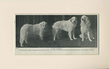 PYRENEAN MOUNTAIN DOG THREE NAMED DOGS OLD 1930/'S PRINT MOUNTED READY TO FRAME