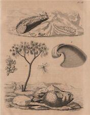 Porcupinefish. Diopsis/ichneumon wasp. Sea hare. Doris sea slug. Doum palm 1834