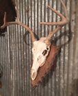 European Deer Skull Mount Wall/Table Pedestal Plaque Oak Arrowhead (dark walnut)