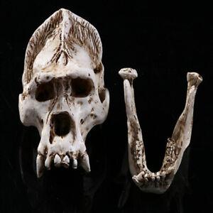 1PC Orangutan Skull Animal Bone Decor for Decoration Display Birthday Gift
