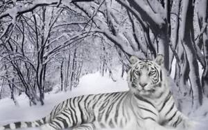 Tiger white in snow forest Beautiful QUALITY CANVAS Print 45cm Poster cat