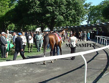 PALACE MALICE 8 by 10 PHOTO 2014 THE METROPOLITAN Horse Race BELMONT PARK #4