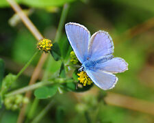 Blue Butterfly GREETINGS CARD Steve Greaves Print Photo Wildlife Nature Art