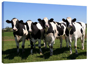 Marching Cows Canvas Wall Art Picture Print also in Black and White