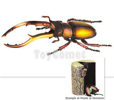 Indonesia Stag Beetle Insect Part II 4D 3D Animal Puzzle Realistic Model Kit Toy