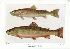 BELLISSIMO Rainbow Trota Pesce LIBRO STAMPA/PIASTRA su carta, 85+ anni