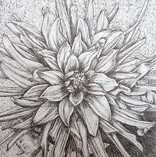 DAHLIA 2 - PEN DRAWING - ART ORIGINAL - STUDIO ANGELA