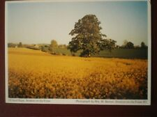 POSTCARD SOMERSET STRATTON ON THE FOSSE - RAPE FIELDS