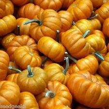 Jack Be Little Pumpkin Heirloom Seeds - Non-GMO - Untreated - Open Pollinated!